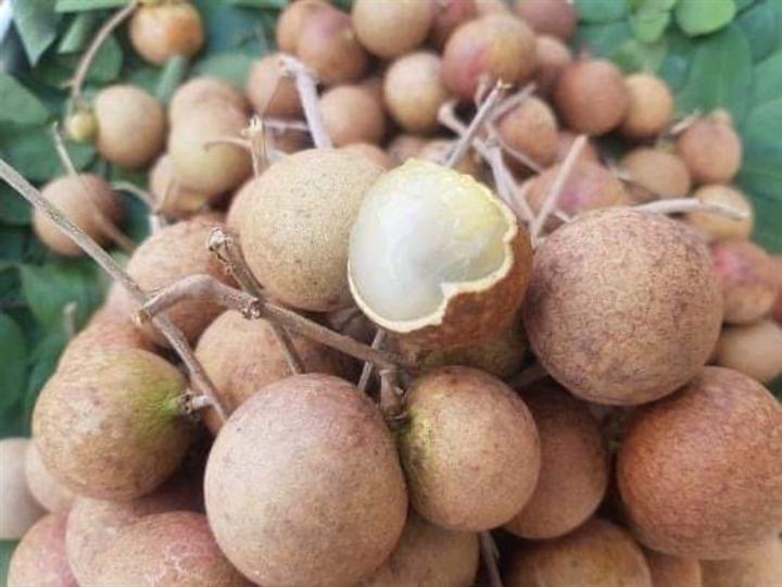 1.300 tấn nhãn ế ẩm, nông dân Bà Rịa - Vũng Tàu khóc ròng vì giá chỉ còn 1/3 - 1