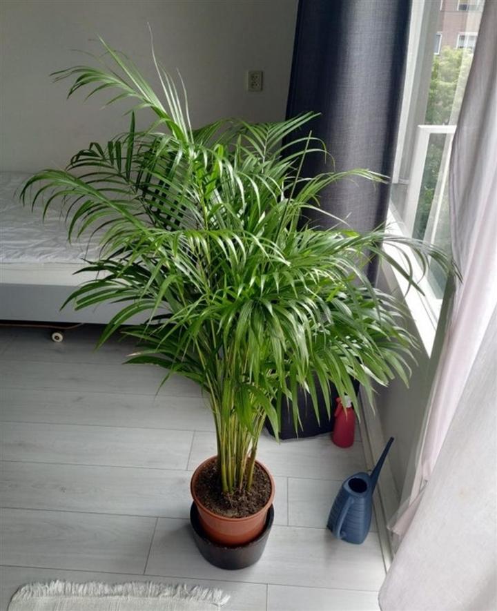 9 loại cây cảnh giúp hút ẩm cho ngôi nhà - 8
