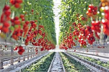 VNPT đem nhiều giải pháp hỗ trợ ngành nông nghiệp đón đầu CMCN 4.0