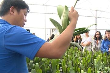 Nông nghiệp công nghệ cao phải xác định chỗ đứng và nhu cầu thị trường