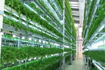 Hà Nội áp dụng nhiều giải pháp khuyến khích phát triển nông nghiệp công nghệ cao