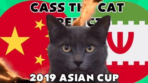 """Mèo Cass """"tiên tri"""" kết quả trận Trung Quốc vs Iran hôm nay 24/1"""