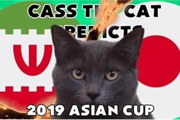 Trận Iran vs Nhật Bản vòng Bán kết ASIAN CUP 2019: Mèo tiên tri Cass dự đoán chiến thắng nghiêng về Iran
