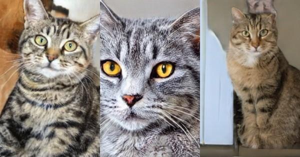 Đây không phải mèo thật, mà chỉ là mèo do AI tạo ra - Ảnh 2.