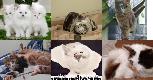 Đây không phải mèo thật, mà chỉ là mèo do AI tạo ra - Ảnh 3.