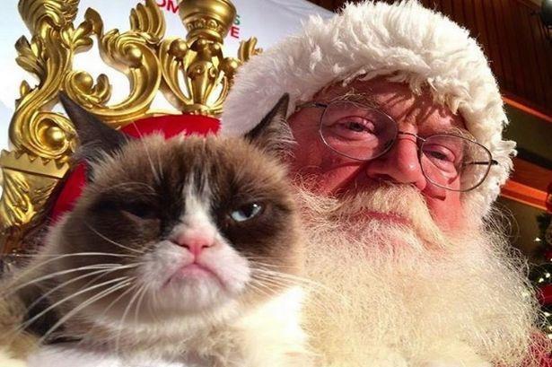Chu meo cau co trong meme noi tieng 'Grumpy Cat' da qua doi hinh anh 3