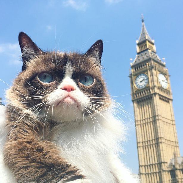 Chu meo cau co trong meme noi tieng 'Grumpy Cat' da qua doi hinh anh 4