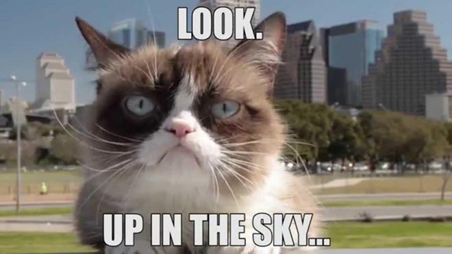 Chu meo cau co trong meme noi tieng 'Grumpy Cat' da qua doi hinh anh 6