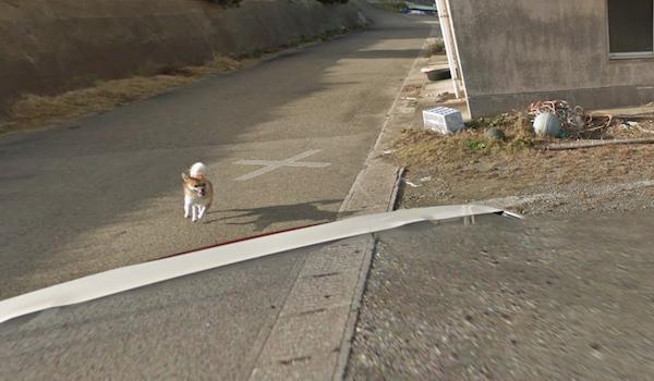Google Street View ghi lại cảnh xe chụp hình đường phố đâm phải con thỏ lao qua đường - Ảnh 8.