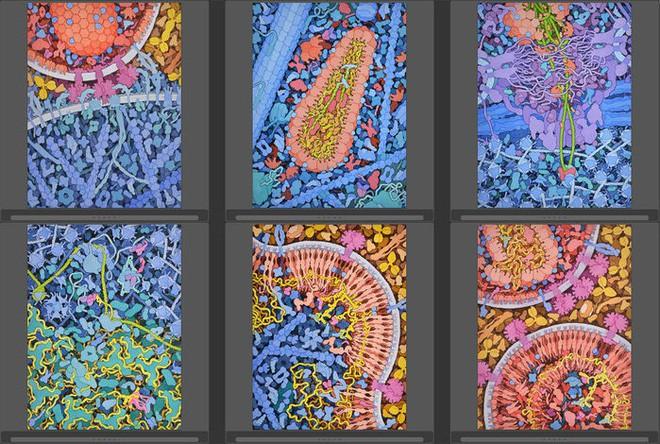 Nhà khoa học tô màu cho những con virus, biến chúng thành tác phẩm nghệ thuật - Ảnh 4.