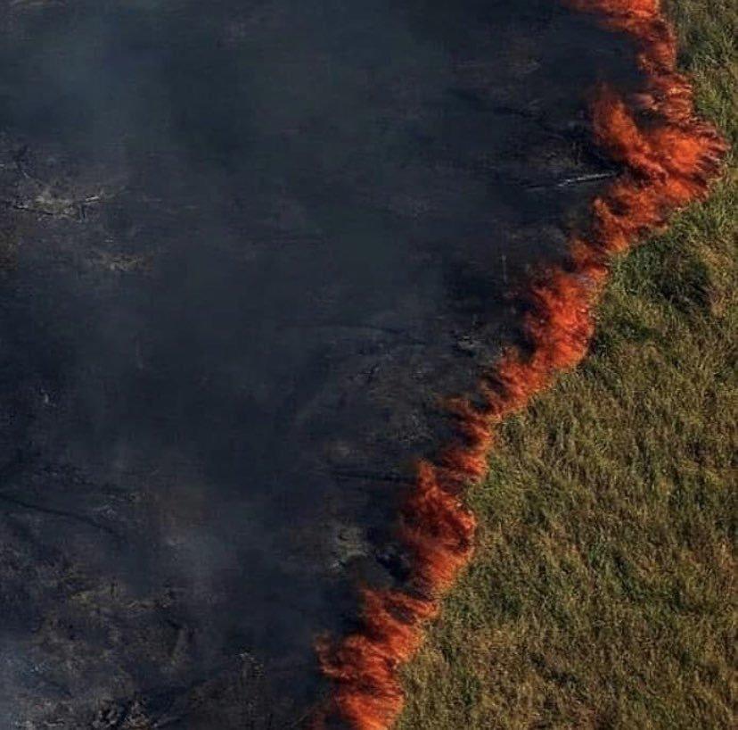 Tìm đám cháy rừng Amazon trên Google, kết quả cho ra toàn... máy tính bảng - Ảnh 7.