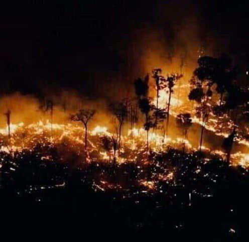Tìm đám cháy rừng Amazon trên Google, kết quả cho ra toàn... máy tính bảng - Ảnh 5.