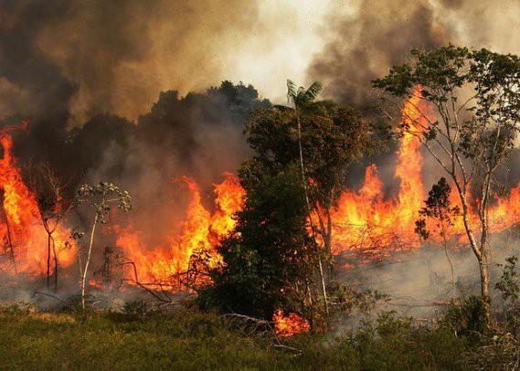 Tìm đám cháy rừng Amazon trên Google, kết quả cho ra toàn... máy tính bảng - Ảnh 16.
