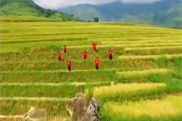 """Bài mẫu viết thư UPU lần thứ 49 năm 2020: Thông điệp """"Tự hào Việt Nam"""""""