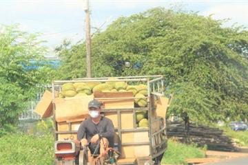 Sầu riêng giảm giá sốc sau phát ngôn của ngành nông nghiệp