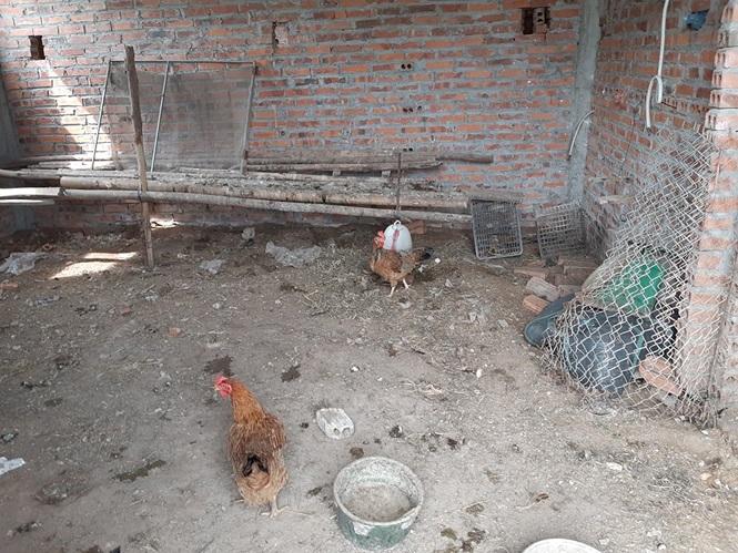 Cận cảnh trường học trăm tỷ biến thành trại gà hoang hoá - ảnh 8