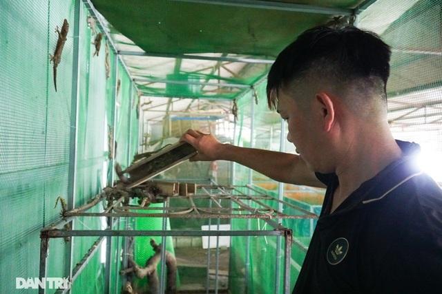 """Mục sở thị trang trại nuôi tắc kè hoa """"độc nhất"""" ở Hà Nội - ảnh 1"""