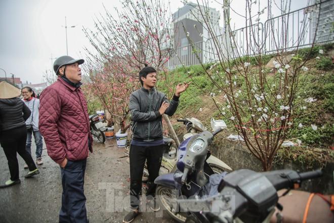 Đào cánh trắng hiếm có bạc triệu xuất hiện ở Nhật Tân - ảnh 11