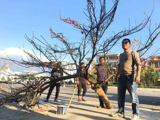 Lên tận Lai Châu buôn đào rừng, thanh niên lãi cả trăm triệu đồng - ảnh 4