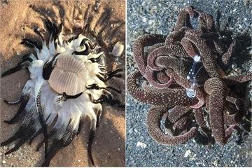 Quái vật biển có hàng chục xúc tu ngoe nguẩy vừa đẹp vừa đáng sợ