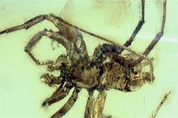 Con nhện cổ đại 380 triệu năm khiến nhiều người phải chết khiếp