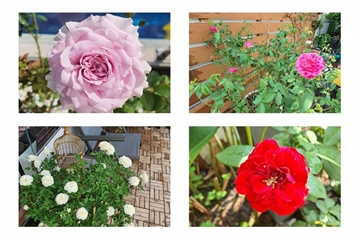 Lóa mắt vườn hồng trong biệt thự nghìn m2 của Vũ Thu Phương