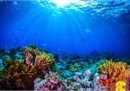 Giải mã âm thanh bí ẩn, đánh đố con người dưới lòng đại dương