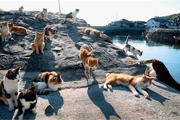 Bật mí về 'vương quốc mèo' có dân số đông hơn con người