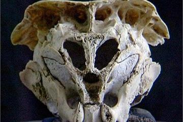 Những hộp sọ bí ẩn nhất từng được phát hiện