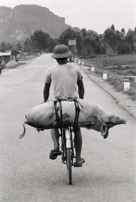 Tron mat canh cho lon bang xe dap o Viet Nam thap nien 1990