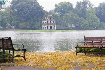 Phố phường Hà Nội đẹp nao lòng mùa sấu trút lá vàng