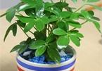 10 loại cây hút tài, đuổi tà 'cực chất' trong tháng cô hồn, gia chủ yên tâm hưởng phúc