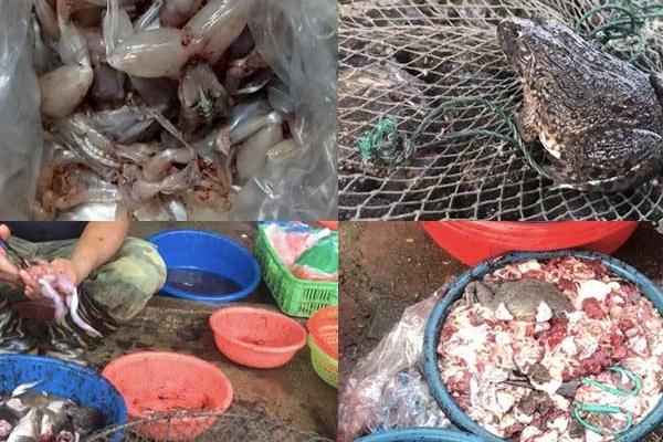 Rợn người hình ảnh ếch Trung Quốc 'ngập' sán bán ở chợ dân sinh