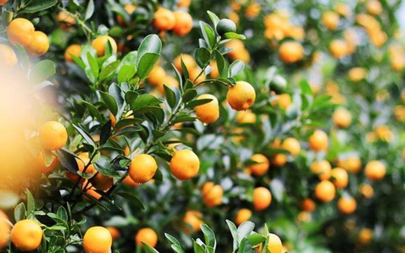 10 loại cây hút tài, đuổi tà 'cực chất' trong tháng cô hồn, gia chủ yên tâm hưởng phúc - 2