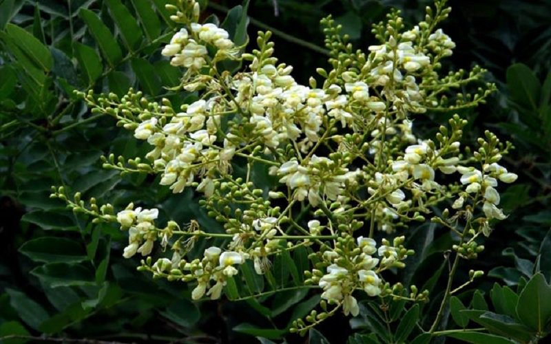 10 loại cây hút tài, đuổi tà 'cực chất' trong tháng cô hồn, gia chủ yên tâm hưởng phúc - 4