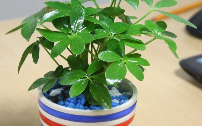 10 loại cây hút tài, đuổi tà 'cực chất' trong tháng cô hồn, gia chủ yên tâm hưởng phúc - 7