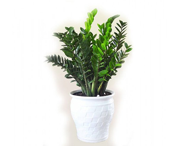 Mệnh Hỏa nên trồng 6 loại cây này để vượng vận, phát tài - 3