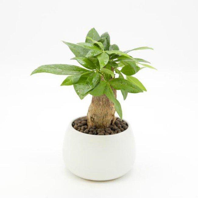 Mệnh Hỏa nên trồng 6 loại cây này để vượng vận, phát tài - 5