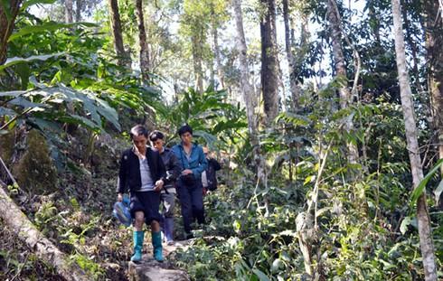 Hình ảnh vụ cháy rừng ở huyện Sa Pa (Lào Cai) - ảnh 8