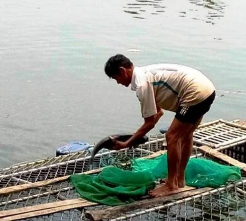 Huế: Thiếu ô xi, cá trên sông Bồ chết hàng loạt - ảnh 2