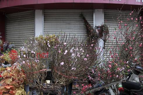 Hà Nội: Đào, hoa ra phố ngày Rằm tháng Chạp - ảnh 6