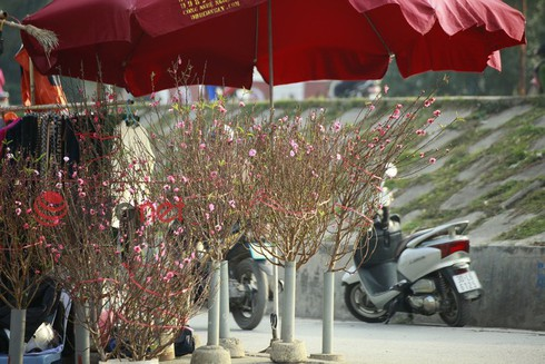 Hà Nội: Đào, hoa ra phố ngày Rằm tháng Chạp - ảnh 3