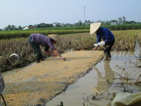 Cuộc sống mến yêu qua mắt nhìn của trẻ em nông thôn Việt Nam - ảnh 2