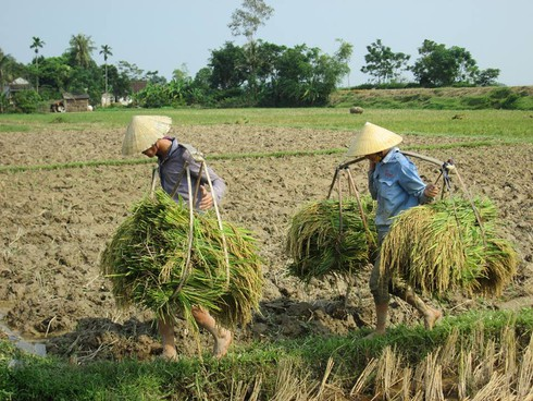 Cuộc sống mến yêu qua mắt nhìn của trẻ em nông thôn Việt Nam - ảnh 5