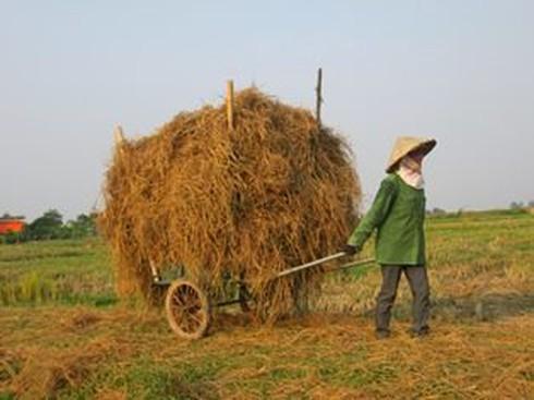 Cuộc sống mến yêu qua mắt nhìn của trẻ em nông thôn Việt Nam - ảnh 6