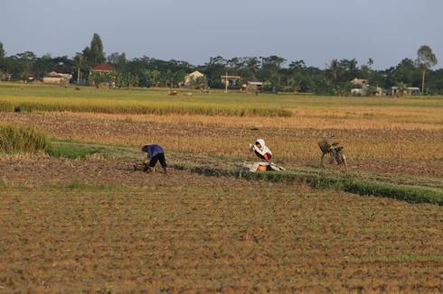 Cuộc sống mến yêu qua mắt nhìn của trẻ em nông thôn Việt Nam - ảnh 8