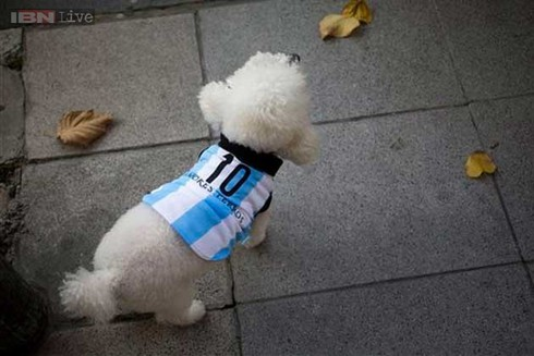 Những chú cún ở Argentina xinh xắn diện áo số 10 của Messi - ảnh 1