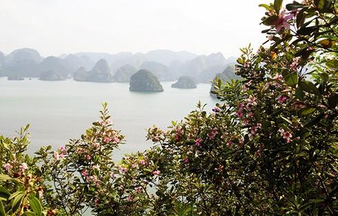Đảo Soi Sim mùa hoa tím - ảnh 12