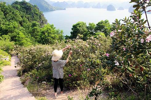 Đảo Soi Sim mùa hoa tím - ảnh 13