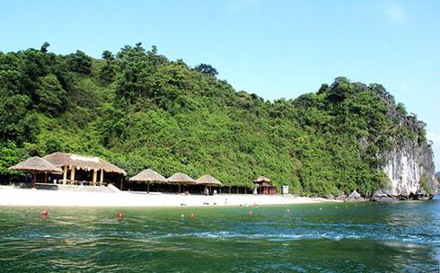 Đảo Soi Sim mùa hoa tím - ảnh 1